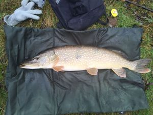Snoek 91 centimeter